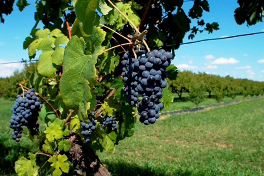 Strada del vino di Bardolino