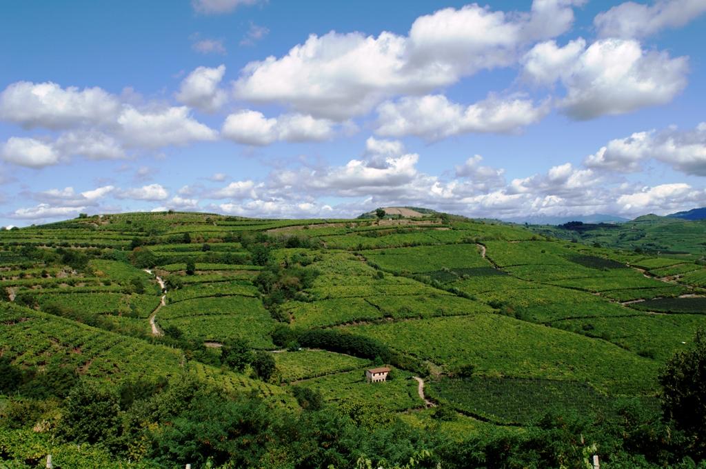La collina veronese tra arte e sapori vivi verona for Piani di serra in collina