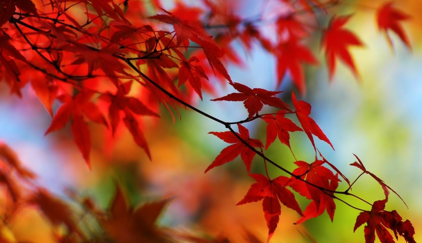 autunno-3